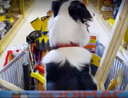 """Increíble campaña donde tu mascota es un """"Cazador de ofertas"""" Sodimac Homecenter"""